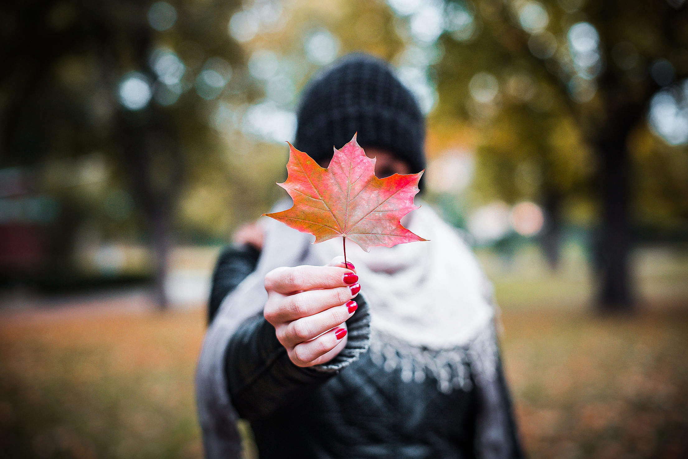 young-girl-holding-autumn-colored-maple-leaf-2-2210×1473